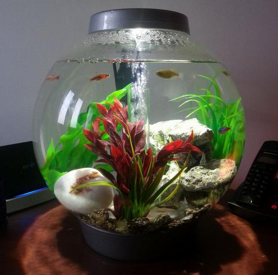 akvarium-krugliy-foto