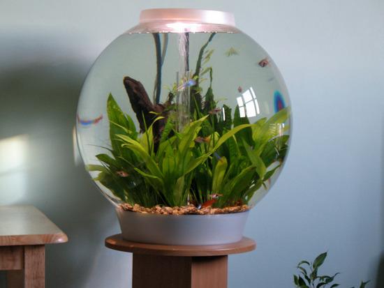 krugliy-akvarium-dlya-ribok