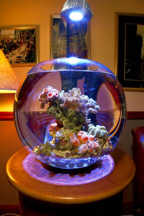 krugliy-akvarium-foto-1