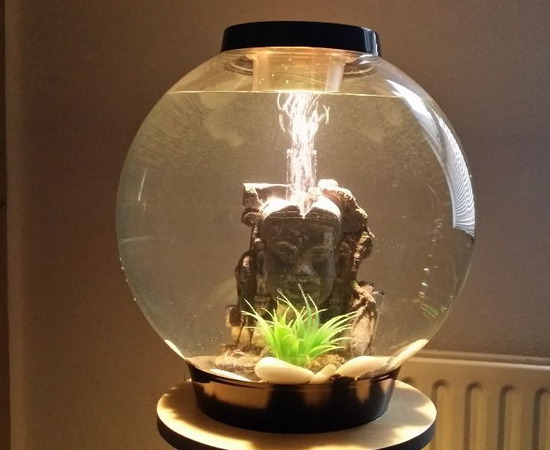 krugliy-akvarium-foto-11
