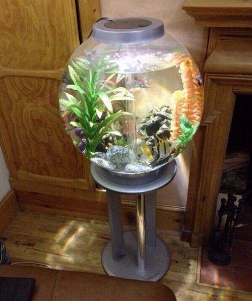 krugliy-akvarium-foto-12