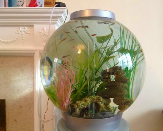 krugliy-akvarium-foto-13