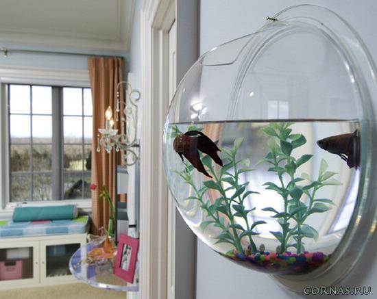 krugliy-akvarium-foto-2