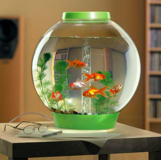 krugliy-akvarium-foto-3