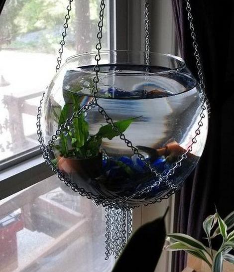 krugliy-akvarium-foto-4