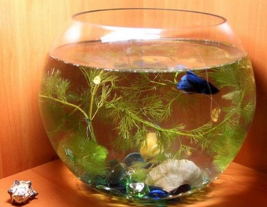 krugliy-akvarium-foto-5