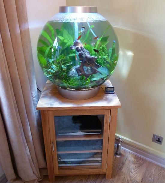 krugliy-akvarium-foto-8
