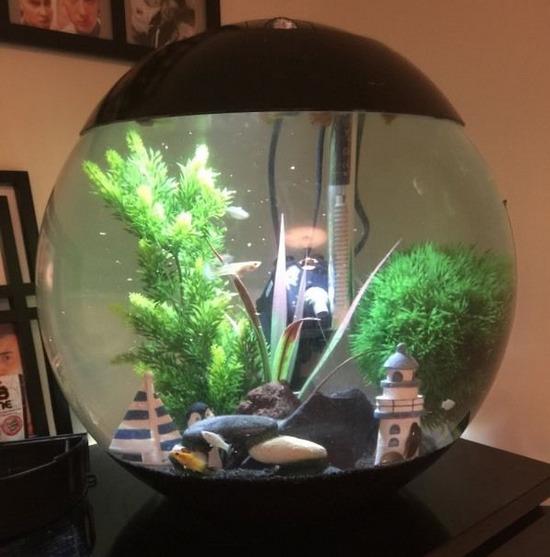 krugliy-akvarium-foto-9