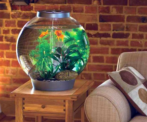 krugliy-akvarium-foto