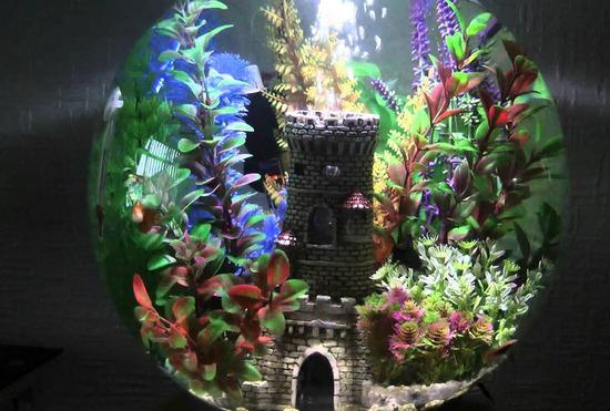 malenkiy-krugliy-akvarium