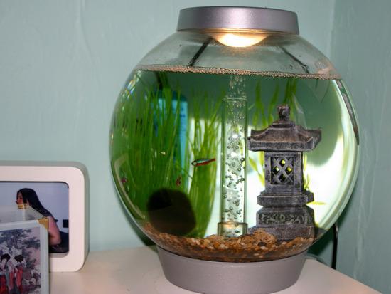 ooformlenie-kruglogo-akvariuma