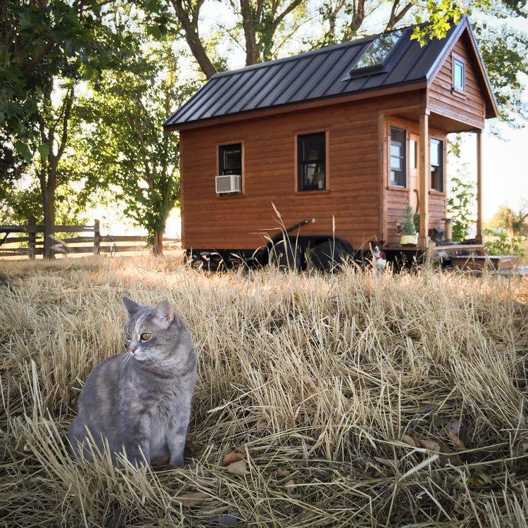 Американка обрела счастье, переехав в крошечный дом | Лучшие истории со всего мира