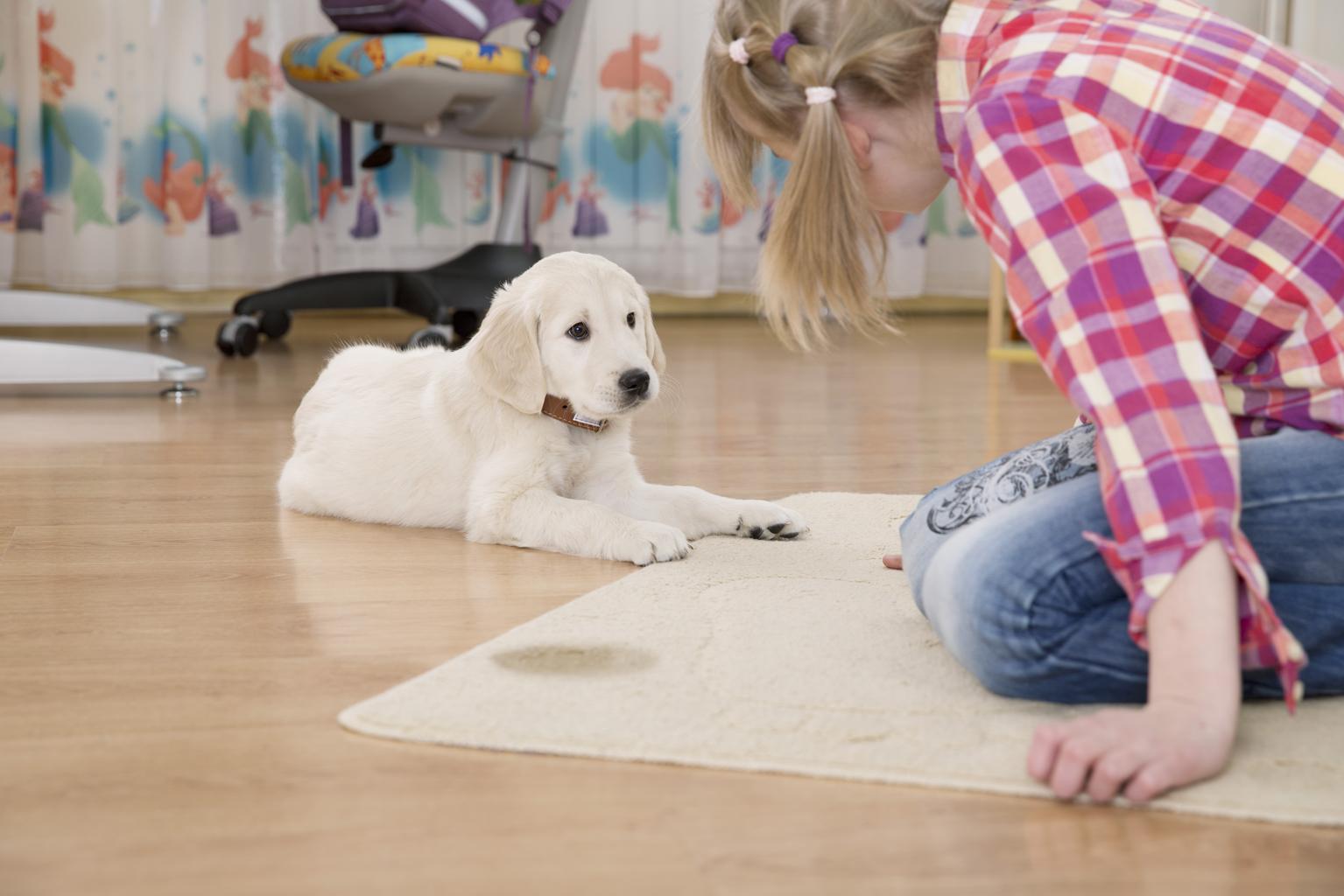 ТОП-5 советов по оформлению квартиры если у вас есть собака